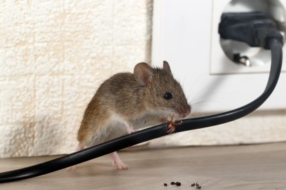 Pest Control in Warlingham, Chelsham, CR6. Call Now! 020 8166 9746